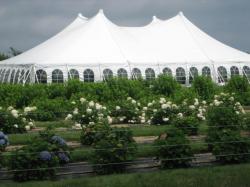 100'x 100' Pole Tent 2000 Series