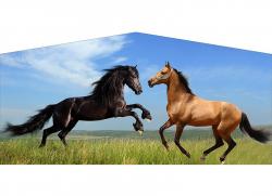 Horses Banner