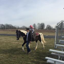Pony, Donkey or Horse Rides