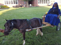 Pony.Cart.Nun 1619117051 Pony, Donkey or Horse Rides