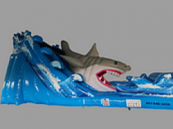 2 1 1619023359 The Shark Attack
