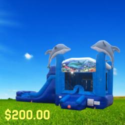Dolphin Combo