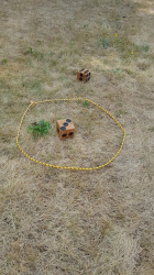 Games Lawn dice